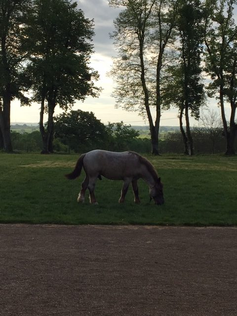 Piedouault's horse